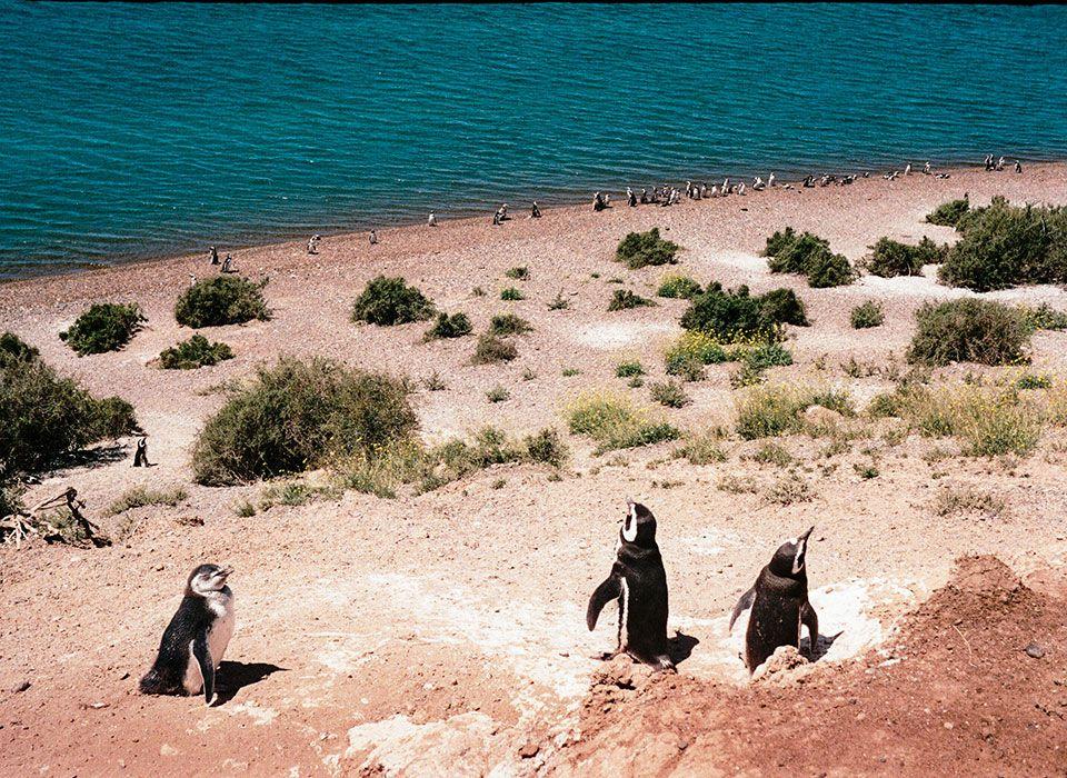 argentinien-halbinsel-valdes-magellan-pinguine