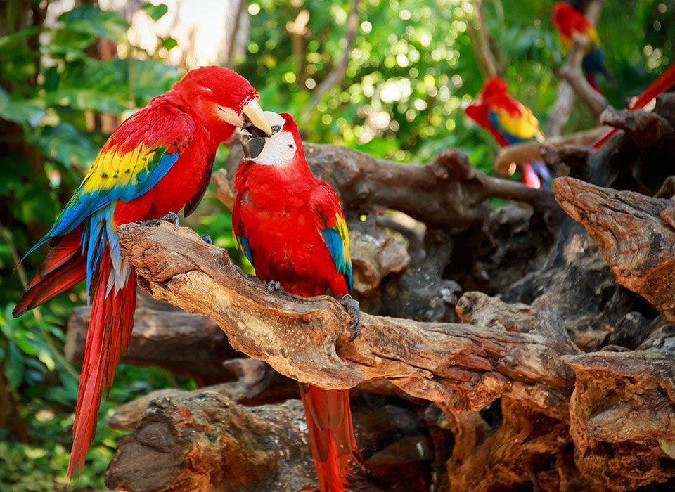 brasilien-pantenal-regenwald-papageien
