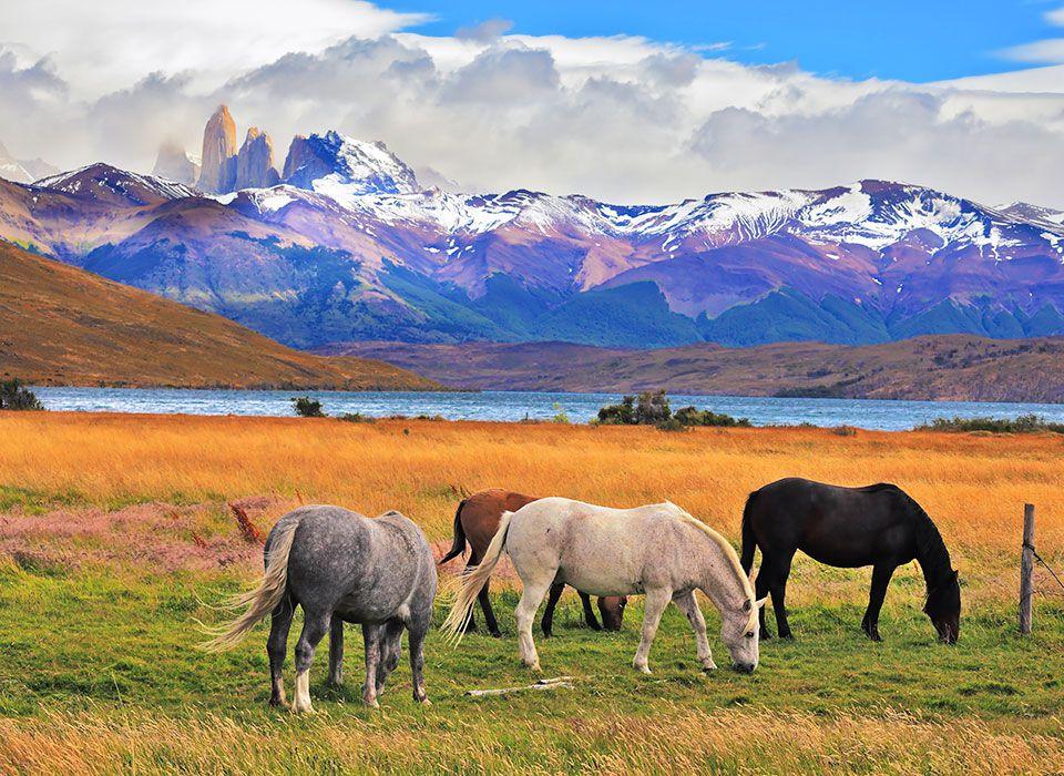 chile-patagonien-pferde-auf-weide