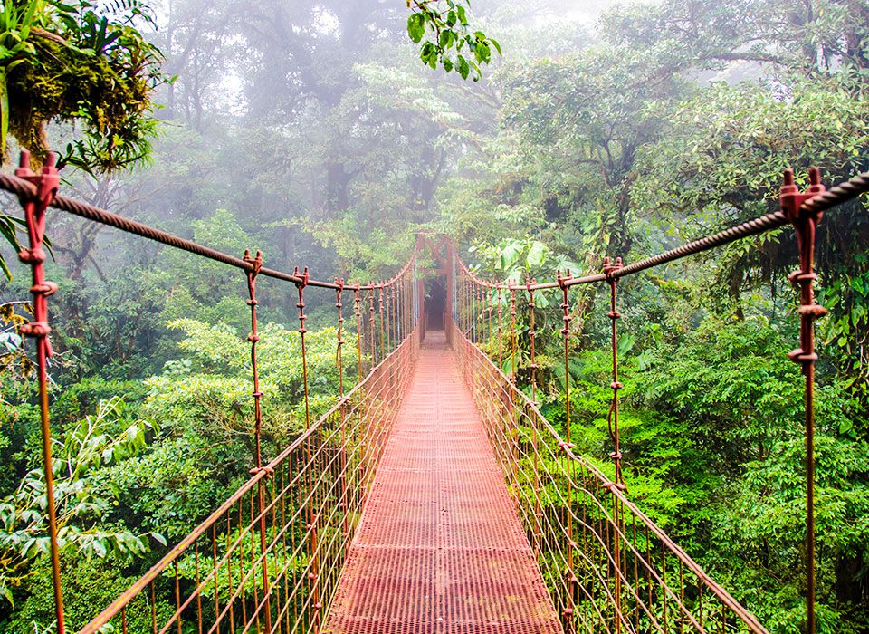 costa-rica-monteverde-nationalpark-haengebruecke-regenwald-selvatura-walkways