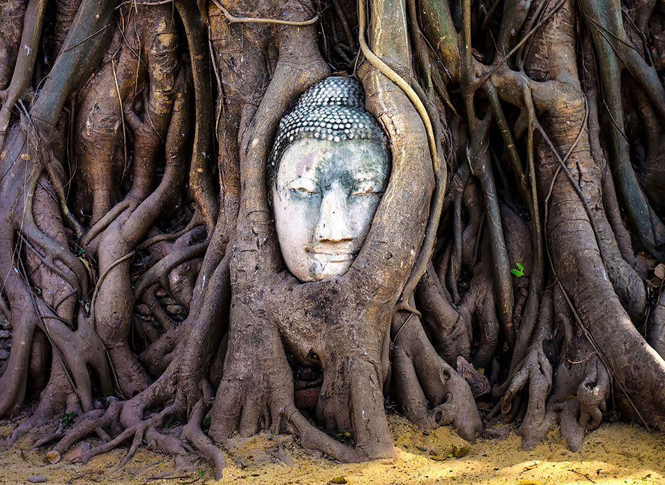 Angkor Wat Tempelanlage - Kambodscha - Buddha mit Baumwurzeln