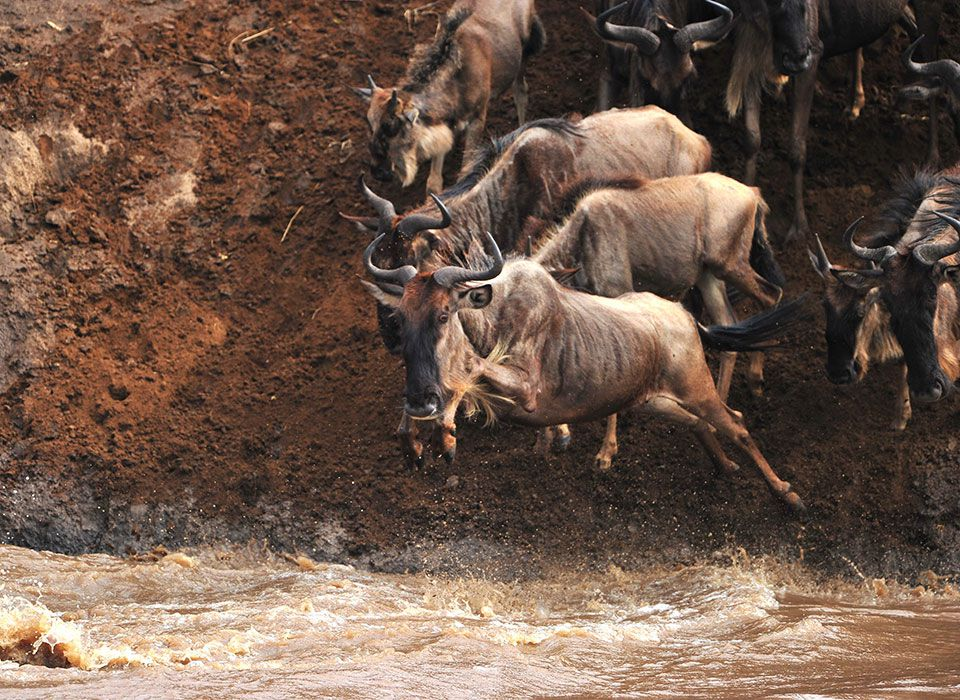 tansania-safari-migration-gnus