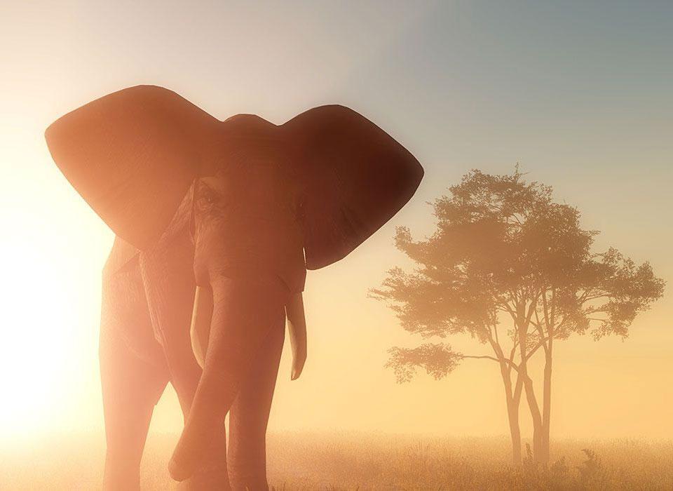 Luxusurlaub in Afrika genießen.