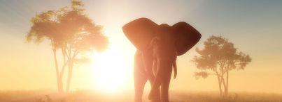 botswana-okawango-delta-moremi-wildlife-reserve-elefant-small