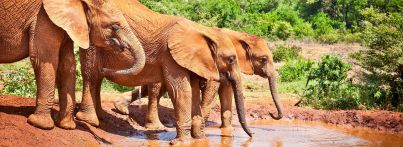 suedafrika-krueger-nationalpark-elefanten-small